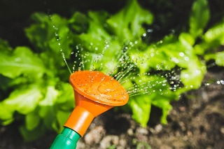 use a fine spray watering can
